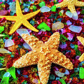 Starfish On Sea Glass by Garry Gay