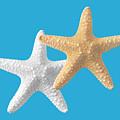 Starfish On Turquoise by Gill Billington