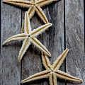 Starfishes In Wooden by Vanessa GFG