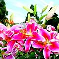 Stargazer Lilies #1 by Ed Weidman