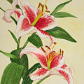 Stargazer Lilies - Watercolor by Hao Aiken