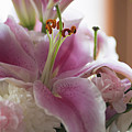 Stargazer Oriental Lilly by Kathy Gallow