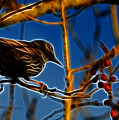 Starling In Winter Garb - Fractal by Lawrence Christopher