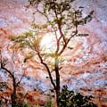 Starry Night Fantasy, Tree Silhouette by A Gurmankin NASA