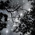 Starry Night Sky by Marianna Mills