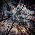 Starry Sky In The Forest by Marianna Mills