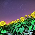 Starry Sky Over Colby Farm Sunflowers Newbury Ma by Toby McGuire