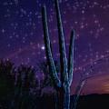 Starry Starry Sonoran Skies  by Saija  Lehtonen