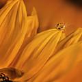 Starry Sunflower by Gabriel Jardim