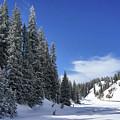 Stately Pines by Leda Robertson