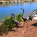 Statueque Cranes by Lessandra Grimley