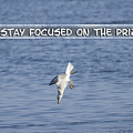 Stay Focused On The Prize by Thomas Young