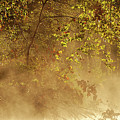 Steam Mist by Robert Charity