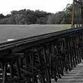 Steel Rails by Elizabeth Hart