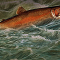 Steelhead Trout Fish No.143 by Randall Nyhof