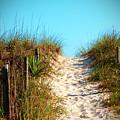 Steep Beach Path by Cynthia Guinn