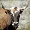 Steer Bull by Athena Mckinzie