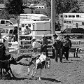 Steer Wrestling by Susan Chandler