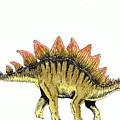 Stegosaurus by Michael Vigliotti