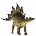 Stegosaurus Profile by Corey Ford