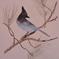 Stellar Jay On Ponderosa Branch by Sally Atchinson