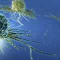 Stem Cells by Three D Four Medical and Photo Researchers