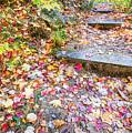 Step Into Fall by David Pratt