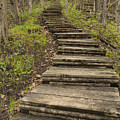 Step Trail In Woods 17 A by John Brueske
