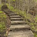 Step Trail In Woods 17 B by John Brueske
