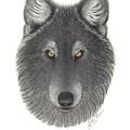 Stepinwolf by Jackie Meyers