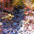 Stepping Stones At Autumn Forest by Jeelan Clark