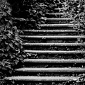 Steps by Catherine Balfe