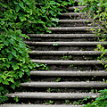 Steps With Ivy by Catherine Balfe