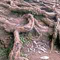 Steps With Roots by Lakshmi Vandana