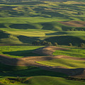 Steptoe Butte 4 by Tracy Knauer