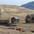 Stevens County Homestead by Charles Robinson
