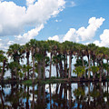 Stick Marsh In Fellsmere Florida by Allan  Hughes