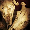 Still Death by Jorgo Photography - Wall Art Gallery