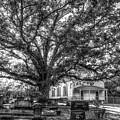 Still Faithful B W God Bethany Presbyterian Church The Old Oak Tree Greene County Georgia Art by Reid Callaway