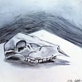 Still Life Drawing Cow Skull 02 by Luke Galutia