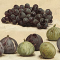 Still Life Of Grapes And Figs by MotionAge Designs