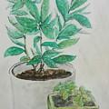 Still Life Plants by Jan Marie