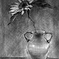 Still Life - Vase With One Sunflower by Jose A Gonzalez Jr