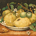 Still Life With Bowl Of Citrons by Giovanna Garzoni