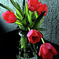 Still Life With Tulips by Jasna Dragun
