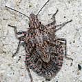 Stink Bug by Breck Bartholomew