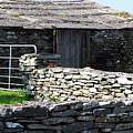Stone Barn Doolin Ireland by Teresa Mucha