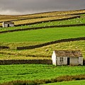 Stone Barns In The Teesdale Landscape by Martyn Arnold
