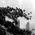 Stone Cold Fog by Steven Macanka