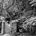 Stone Stairway Along The Wissahickon Creek In Black And White by Bill Cannon